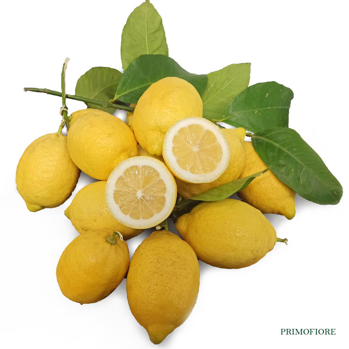 Limone femminello siracusano biologico Primofiore
