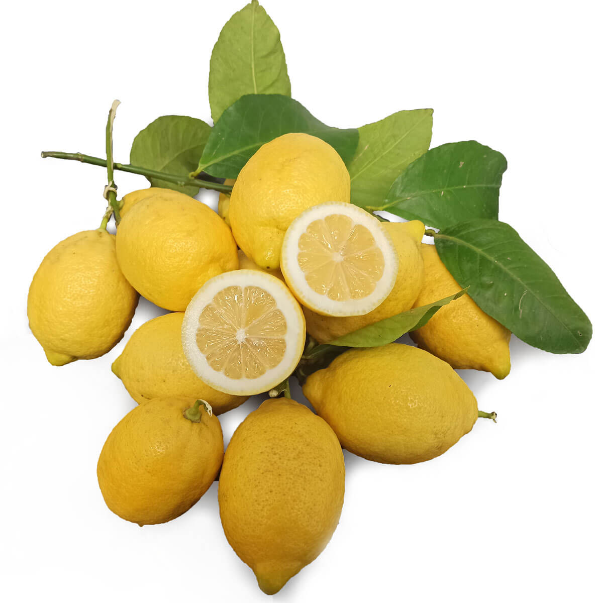 Limone femminello siracusano biologico