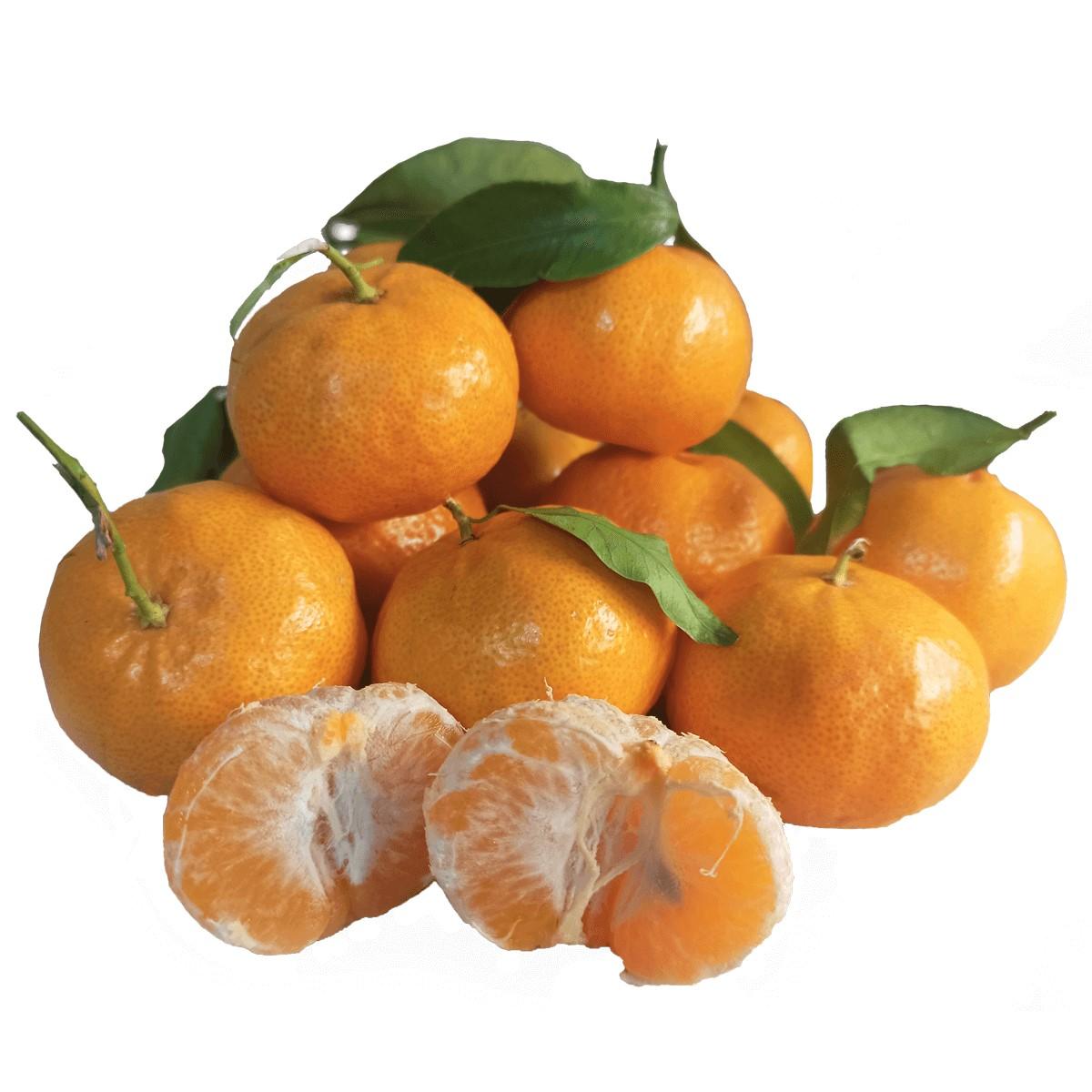 Mandarini Ciaculli Biologici